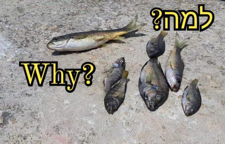 """ליאור בן חיים: """"יציאת דיג לכנרת-נקודות חדשות וישנות"""""""