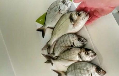 דוראדו 1 : לפני הסערה קצת דיג פיתיונות בתנאים קצת אקסטרימים לזכר ימים עברו