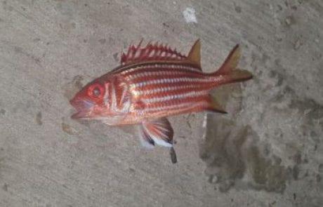 """אילן: """"מישהו יכול להגיד לי איזה דג זה??"""""""