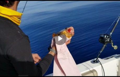 אבי כלו: יום של דולפינים ושחרורים