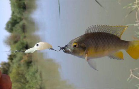 """ליאור בן חיים: """"יציאת דיג לנהר הירדן בזריקה השניה יצא לי נחש.😱"""""""
