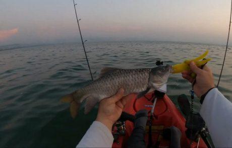 """עמית משני דייגים: """"ממש תחילת עונת הדיג בטרולינג בכנרת, יצאנו לבדוק את השטח"""""""