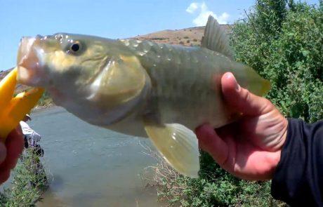 """ליאור בן חיים: """"  אקשן מטורף של דגים גדולים ללא הפסקה"""""""