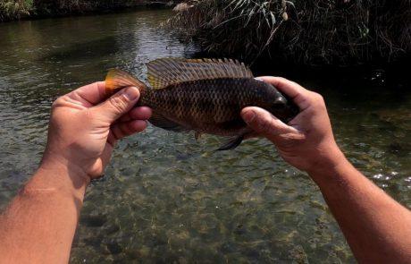 """נפתלי: """"סרטון חדש בערוץ דייג בירדן בזירזור הרבה דגים תענוג צפיה מהנה"""""""