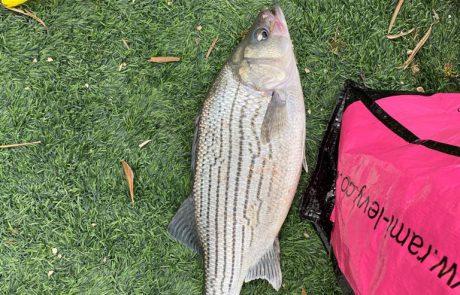 """יהלי לוי: """"יום הבחירות…בחירה לצאת לדוג עם חברים"""""""
