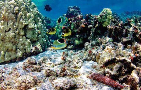 השפעת ההתחממות על החיים בים (הידען)