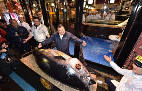 מכירת שיא ביפן – דג טונה נמכר ב 3.1 מיליון דולר