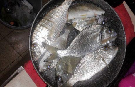 תומר כהן: דיג חוף איזור הדרום פיתיון עם תולעים