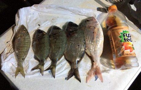 רעם: דיג חוף במיטבו הרבה זמן שלא נהנתי כך