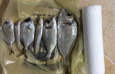 """אמיר: """"ים מלא דגים הרבה שוחררו"""""""