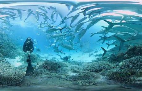 """צילום 360° מתחת למים של ה""""שונית המחסום הגדולה"""" ובאיכות 4K"""
