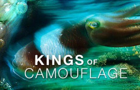 סרטון HD בהמלצת דוראדו 1: מלכי ההסוואה ( קלאמרי, סבידה, דיונון….)