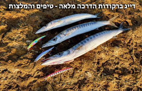 """FISHINGADDICTS :""""דיג ברקודות – הדרכה מלאה איך דגים ברקודות. המלצות טיפים ודמויים מומלצים – Barracuda fishing"""""""