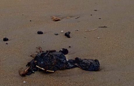 עדכון ממשרדי הפנים, הגנת הסביבה והבריאות: אין להגיע לחופי הים המזוהמים בזפת עד הודעה חדשה