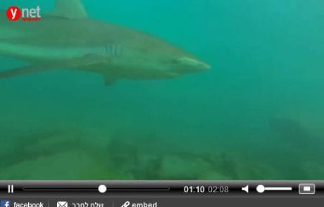 צפו: מבצע אווירי ותת-ימי לתיעוד כרישים בחדרה