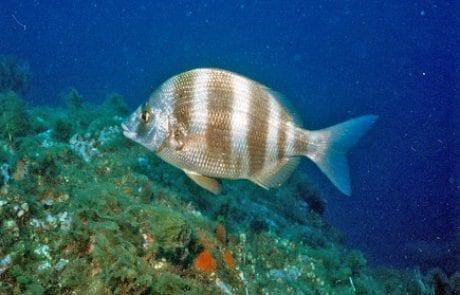 MAKO – דג נשך איש: מה הקטע של הדגים הנושכים המסתוריים בחופינו?